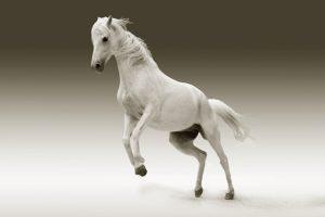 Biała Klacz – jak zrozumieć język snów